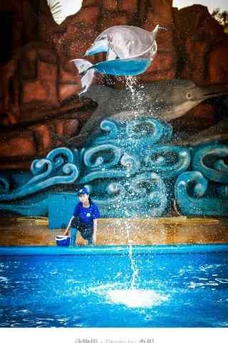 海豚飞跃到空中手机壁纸