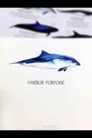 简约手绘海豚手机壁纸