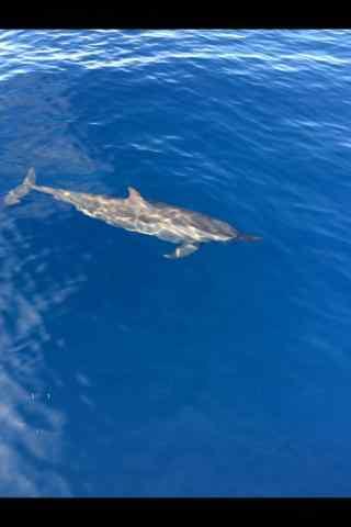 海洋里的精灵海豚手机壁纸