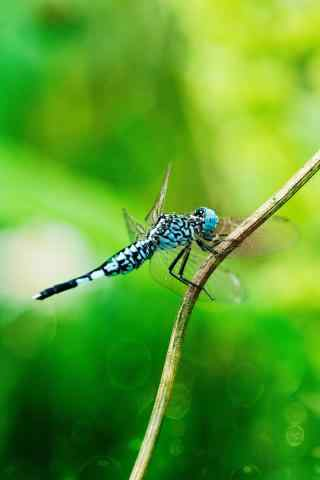 小蜻蜓高清护眼手机壁纸