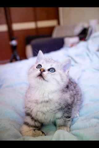 可爱的猫咪抬头看