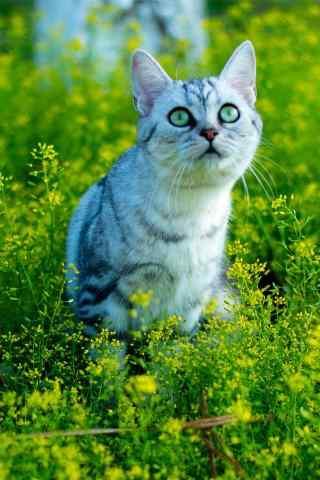 小清新草地上的猫