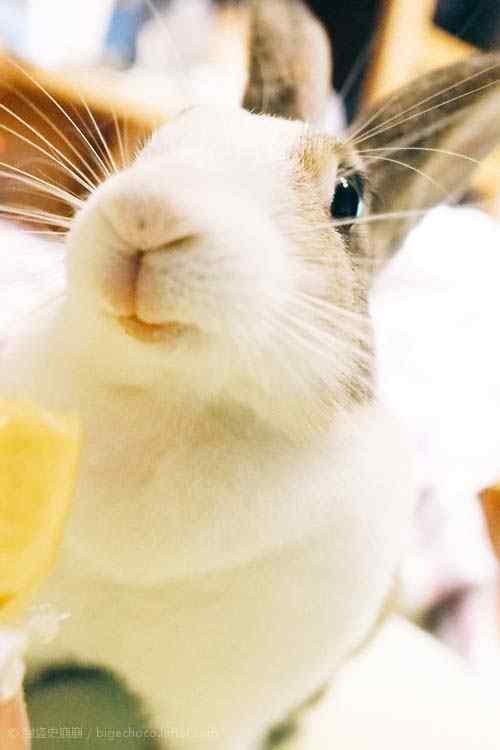 呆萌的小兔子手机壁纸