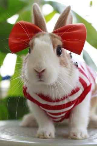头带红蝴蝶结的小兔子手机壁纸