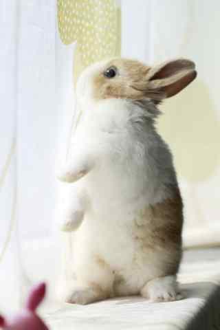 萌萌哒窗边上的小兔子手机壁纸