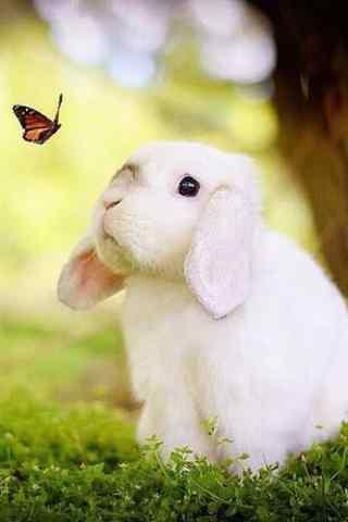可爱小兔子与蝴蝶手机壁纸