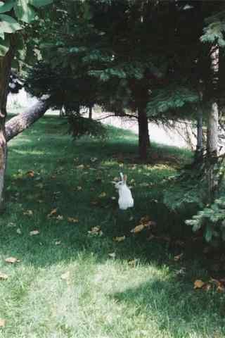 绿草地上的小兔子手机壁纸