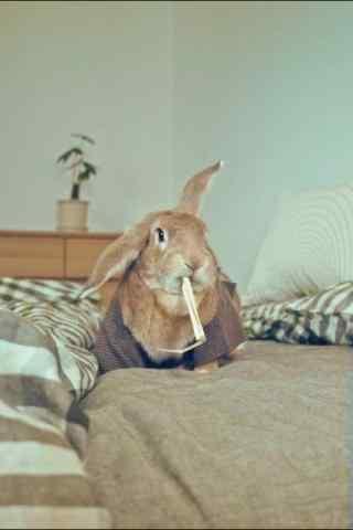 吃东西的小兔子手机壁纸
