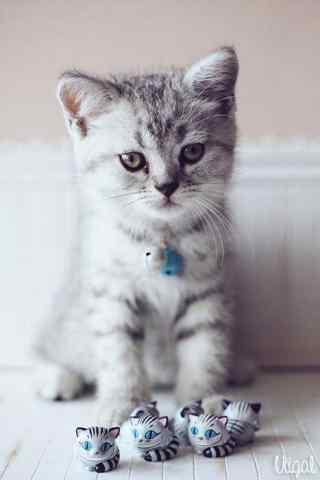 呆萌可爱的短毛猫手机壁纸