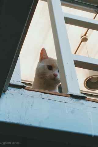 和你玩躲猫猫的小可爱手机壁纸