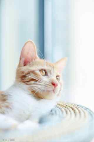 小清新好看的小橘猫手机壁纸