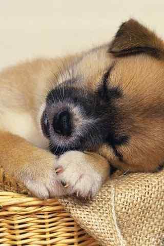 可爱动物高清手机壁纸-手机图片壁纸_动物壁纸