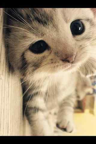 手机壁纸 动物_动
