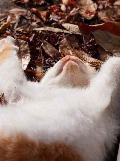 萌萌哒小猫下巴手机壁纸