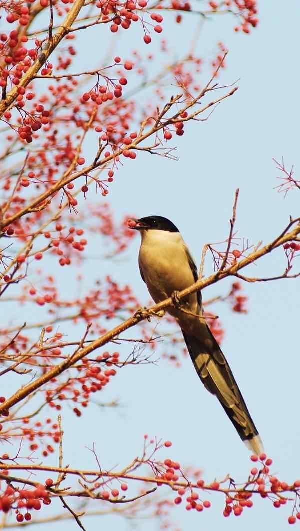 停在树枝上的可爱小鸟手机壁纸