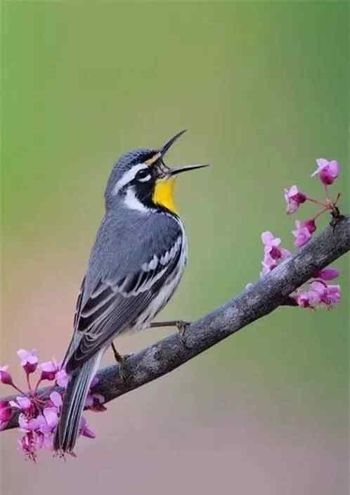可爱的小鸟歌唱手机壁纸