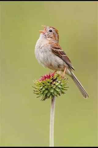 大自然的歌唱家之