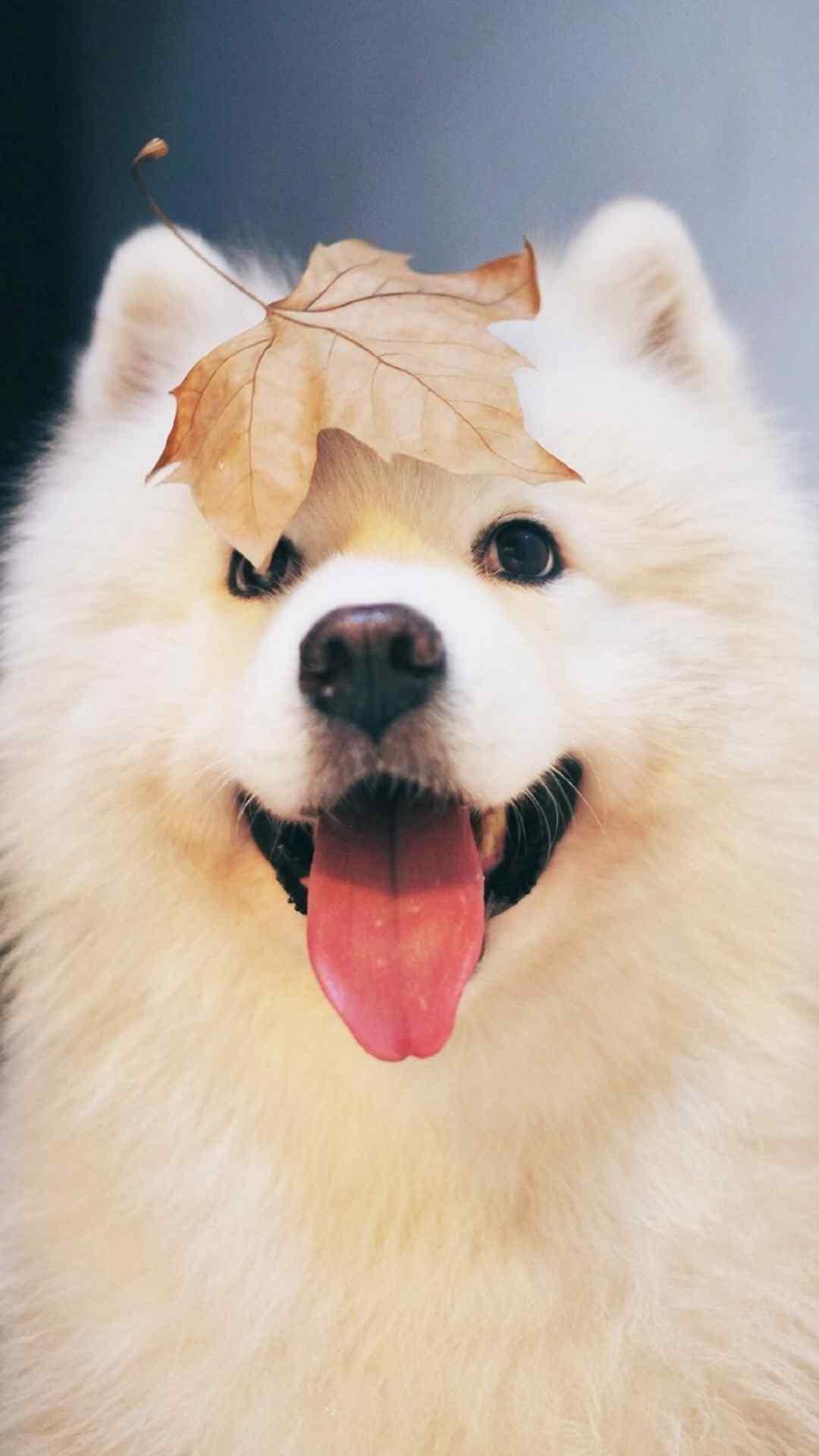 狗狗手机壁纸可爱