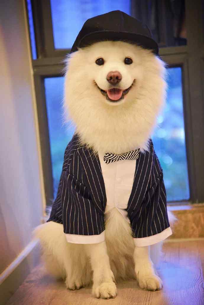 狗狗手机壁纸可爱狗狗萌宠手机壁纸图片