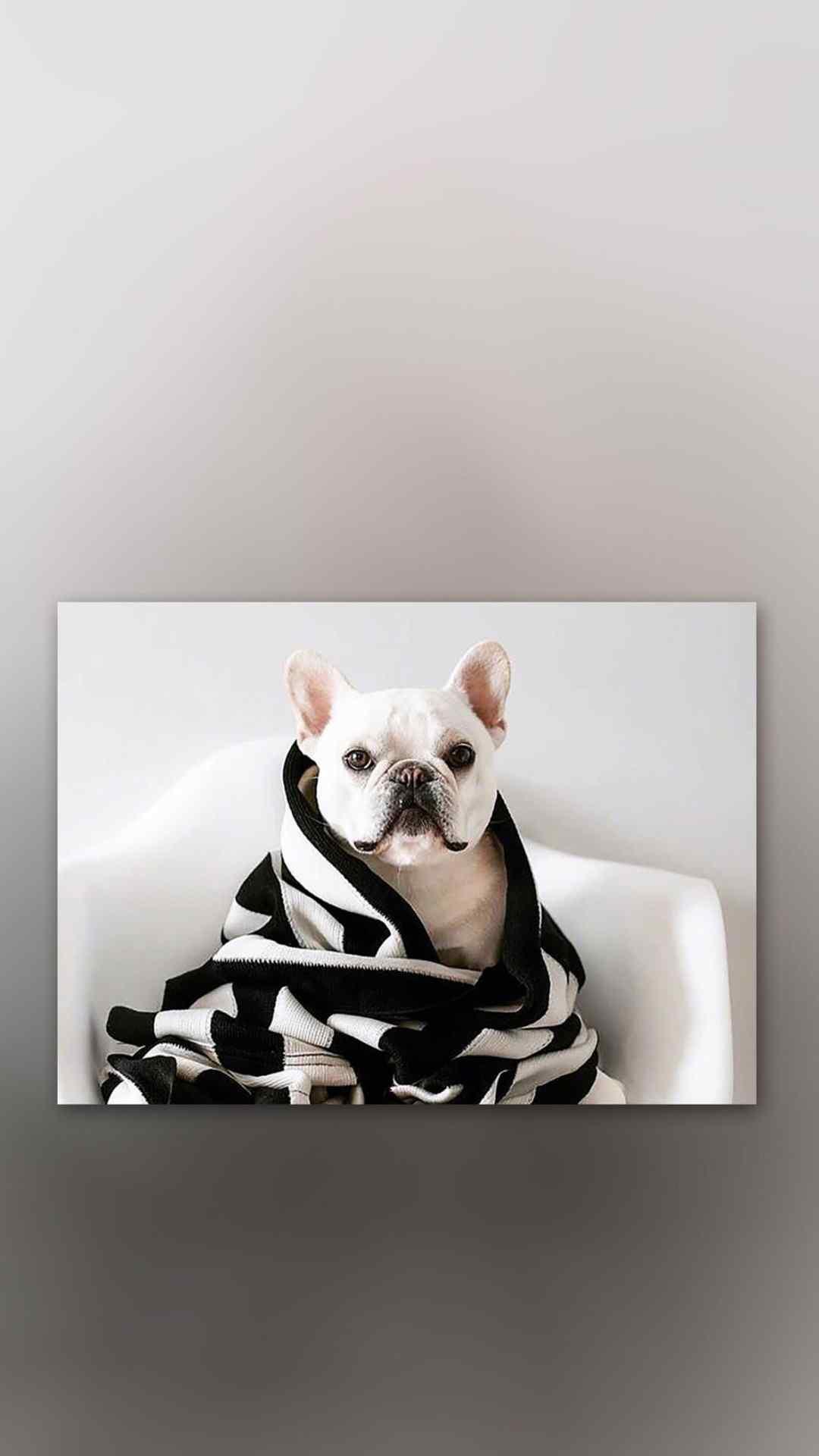 狗狗手机壁纸精选