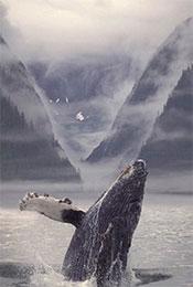 鲸鱼飞身跃出水面