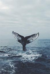 鲸鱼尾巴唯美高清