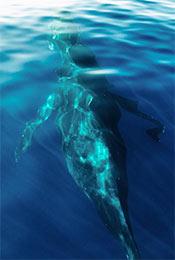 水面下的巨大鲸鱼