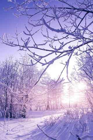 手机风景壁纸:雾凇雪景 暖阳醉人
