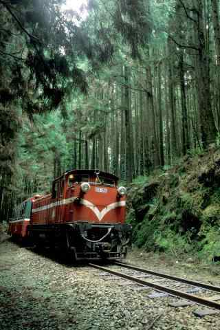 红色火车穿越树林风景手机壁纸