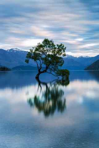 新西兰南岛上孤独的树手机壁纸