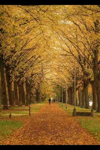 荷兰的唯美秋天风景手机壁纸