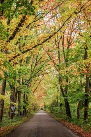 唯美的荷兰的秋天风景手机壁纸