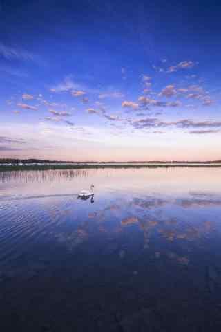 天鹅划过晚霞映照下的湖面唯美风景手机壁纸