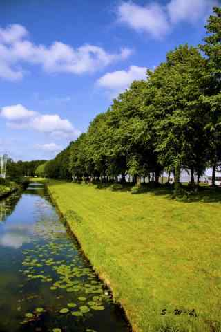 绿色清新护眼荷兰风景手机壁纸