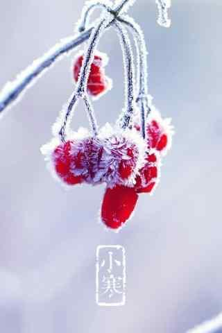 二十四节气之小寒风景手机壁纸(4张)