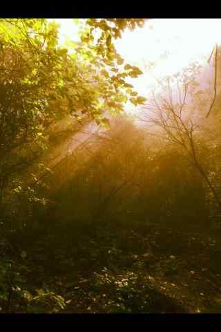 清晨华山唯美的山间风景手机壁纸