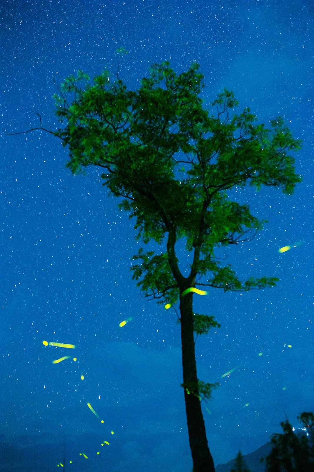 星空下飞舞的萤火虫手机壁纸