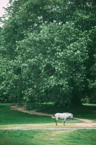 绿野上的白马吴哥自然风景手机壁纸