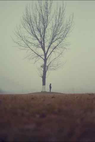 雾中的大树文艺清新图片手机壁纸