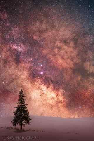 唯美星空下的圣诞树图片手机壁纸
