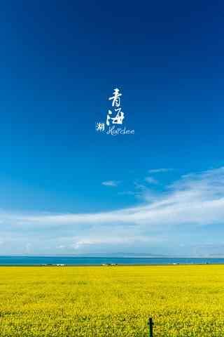 唯美的青海湖油菜花田手机壁纸