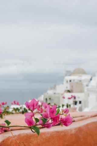 圣托里尼清新花朵盛开唯美风景图片手机壁纸