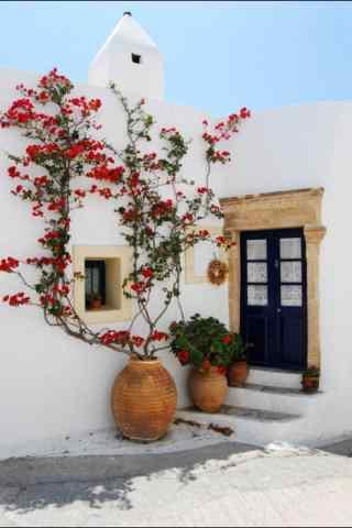 圣托里尼红色花强小清新图片手机壁纸