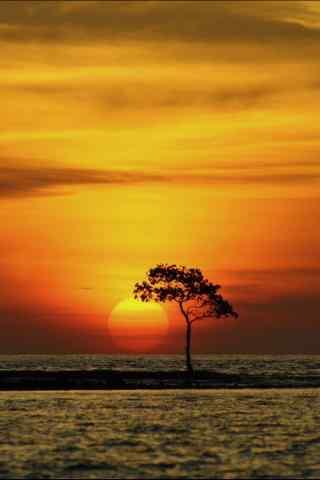 美丽的树下夕阳风景图片