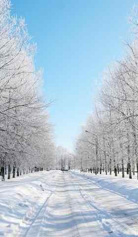 唯美树林里的雪景