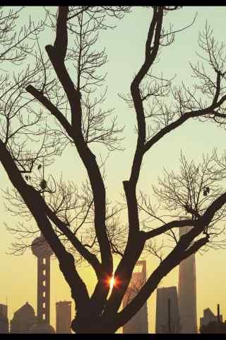 上海唯美艺术摄影图片手机壁纸