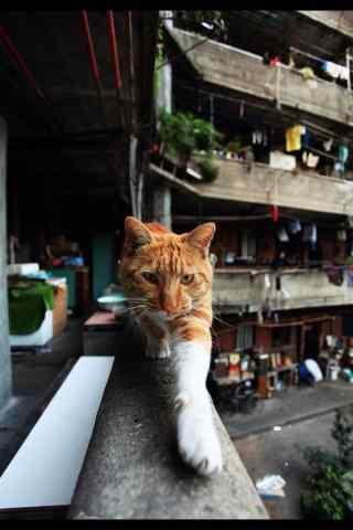 上海老房子可爱猫咪图片手机壁纸