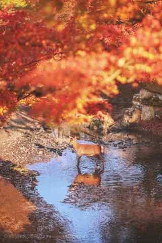 秋季红色山林唯美