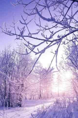 宁夏大西北冬日雪景图片手机壁纸
