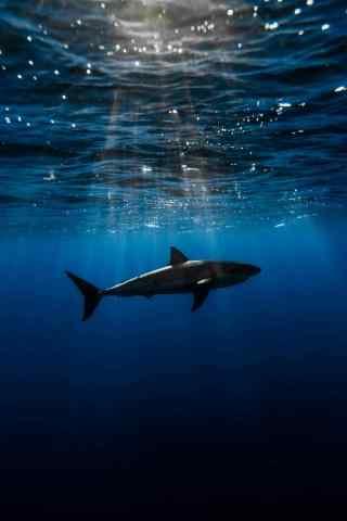海底鲨鱼与曙光风景手机壁纸